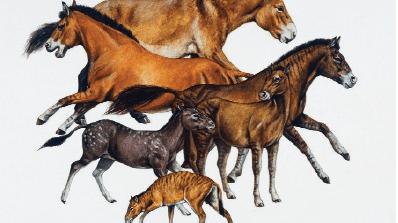 horse-trivia