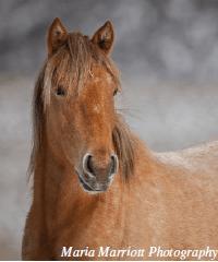 Wild-Horse-Tales