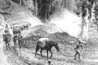 war-horse-wwII